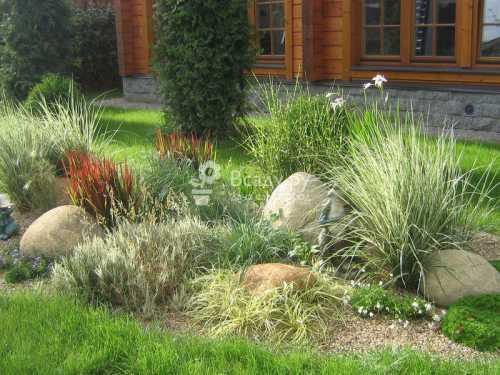Декоративные злаки в садовом дизайне