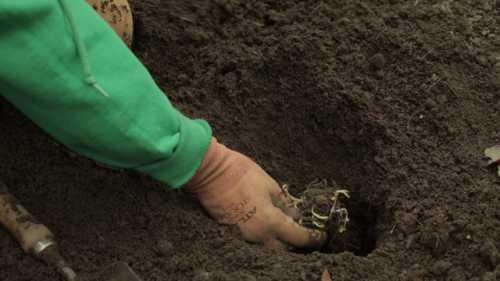 Как  посадить флоксы осенью, преимущества осенней