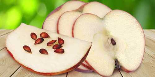 Польза яблочных семечек, возможный вред, кому